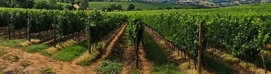 Secured investment for wine maker
